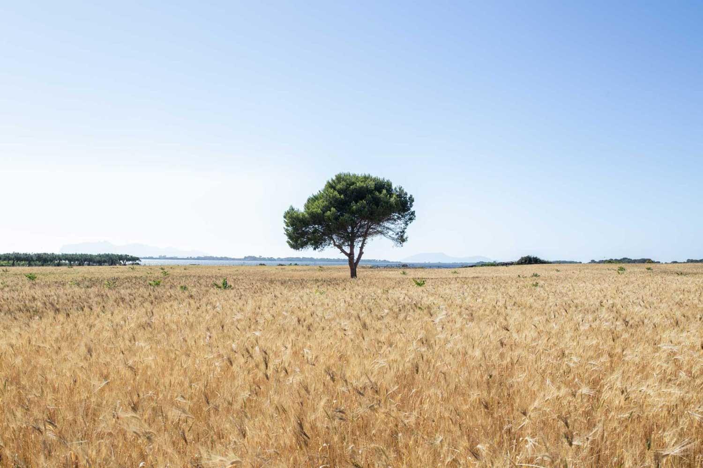 mozia-paesaggio